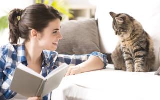 Почему взрослый кот начал гадить