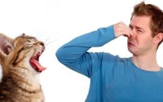 Запах изо рта кошки 🐈 Причины и диагностика