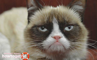 Рекомендации, как померить температуру кошке