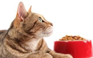 Классы кормов для кошек и их рейтинг