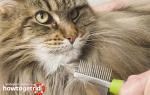 Как правильно избавить кота от колтунов