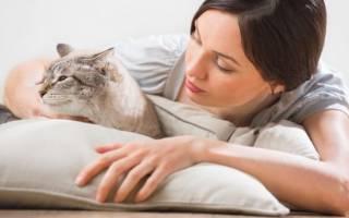 Переезд в новый дом стресс для кошки