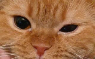 Почему у котят слезятся глазки
