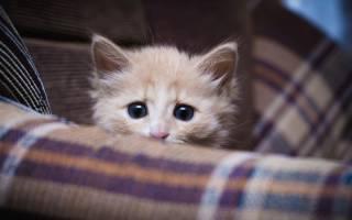Что делать, если кошка боится людей