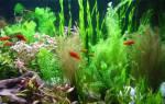 Оформление аквариума в разных стилях
