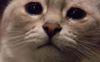 У кота слезится глаз причины и лечение