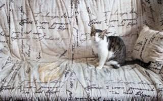 Почему кошка может сделать кровать туалетом