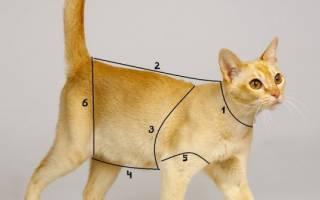 Как сшить куртку для кошки