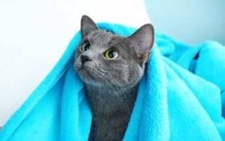 Можно ли мыть кормящую кошку после родов