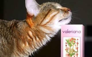 Можно ли коту давать валерьянку в таблетках