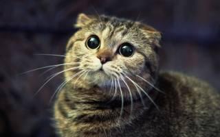 Как правильно наказывать кошку или кота