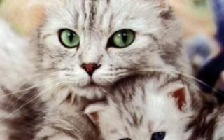Можно ли кормить кота детским питанием