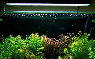 Свет в аквариуме сколько должен гореть