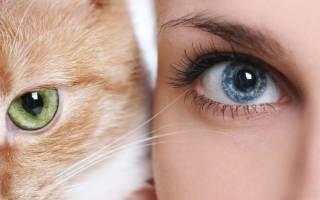 В каком цвете видят кошки окружающий мир?