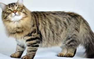 Средства от клещей и блох для кошек
