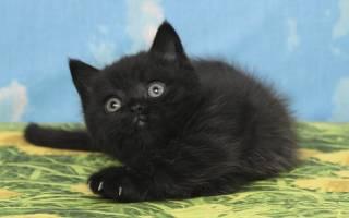 Клички для черных котов и кошек