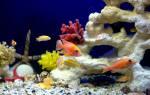 Состав воды для аквариума
