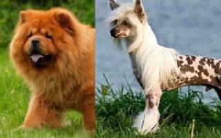 Японские породы собак — Наши лапки