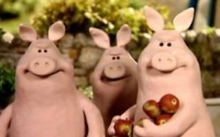 Как проводят мясной откорм свиней