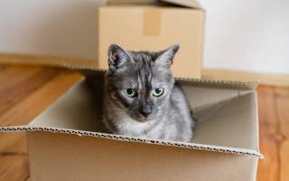 Переезд с кошкой будь как дома