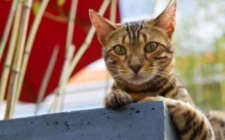 Инсульт у кошек — симптомы и лечение недуга