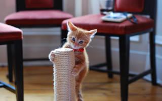 Как приучить кошку точить когти