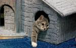 Размеры домика для кошки