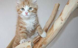 Симптомы и лечение липомы у кошек