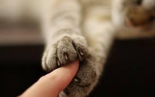Когтеточки для котят любовь или ненависть