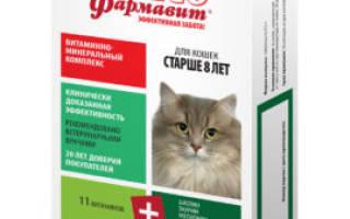 Как повысить иммунитет у кошки —