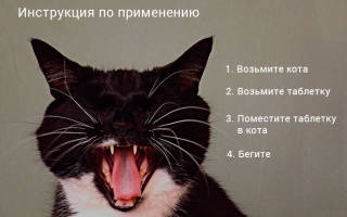Как дать кошке таблетку – 5 способов и советы
