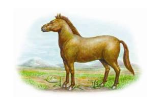 Животные которые вымерли где обитал тарпан