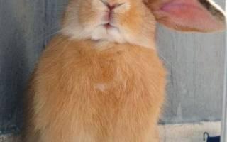 Как воспитать человека — Наши Кролики
