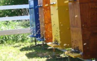 Многокорпусное содержание пчел с рамкой