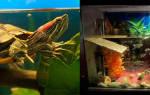 Обустройство аквариума для красноухой черепахи