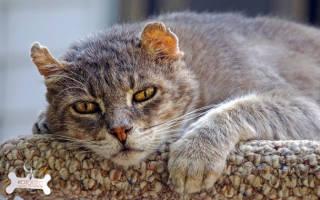 Уход за старой кошкой инструкция для хозяина