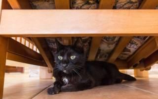 Признаки того что ваша кошка больна