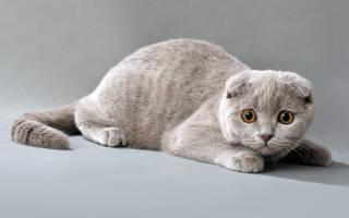 В каком месте кошки любят чтобы их гладили