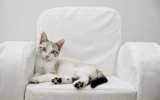 Как удалить запах кошачьей мочи: даем советы