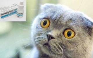 Насморк у кота — методы лечения