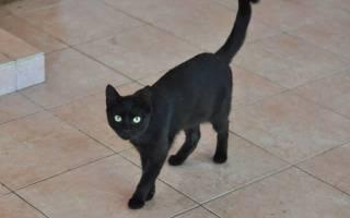 Кот сломал хвост симптомы и методы лечения