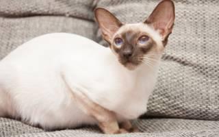Во время беременности выделения у кошки