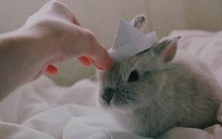 Что любят декоративные кролики