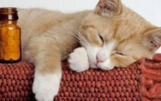 Пиометра у кошек — симптомы и лечение