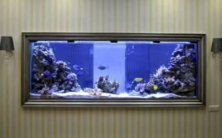 Аквариум с морской водой