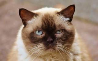 Сколько продлиться жизнь вашей кошки