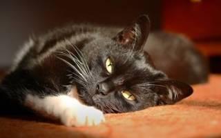 Как выглядят гельминты (глисты) у кошек