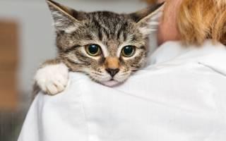 Что делать если кот престал есть