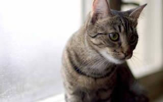 Бешенство у кошек — опасность для человека