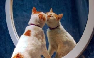 Почему котам нельзя смотреть в зеркало